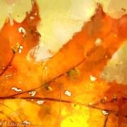 lovely falling leaves!