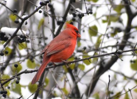 cardinal 11-9-2018 10-16-50 AM
