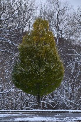 tree 11-10-2018 5-00-04 PM