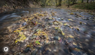 Fall Leaves in Steel Creek near the Buffalo National River