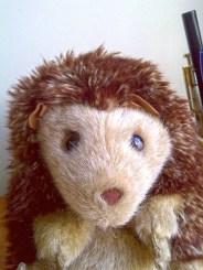 Hedgehog love.