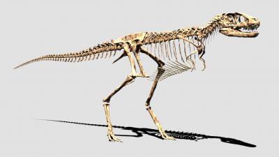デジタル復元したティラノザウルスの幼体骨格