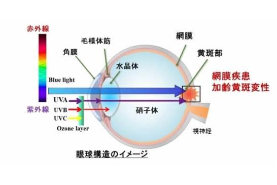 (図1)ブルーライトが目の網膜にダメージを与えるイメージ