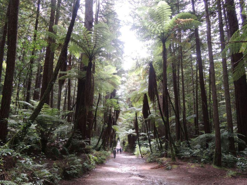 Cestička medzi stromami
