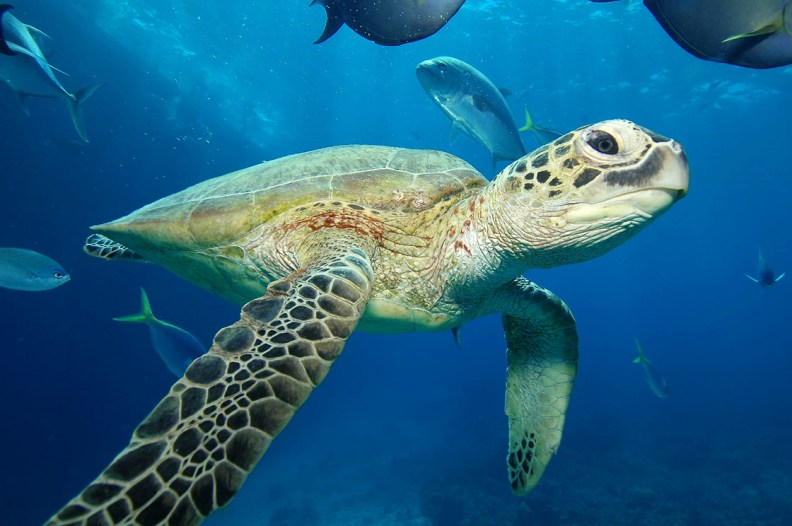 Nájdi cieľ č.2 - korytnačka (Promo fotka Sunlover Reef Cruises)