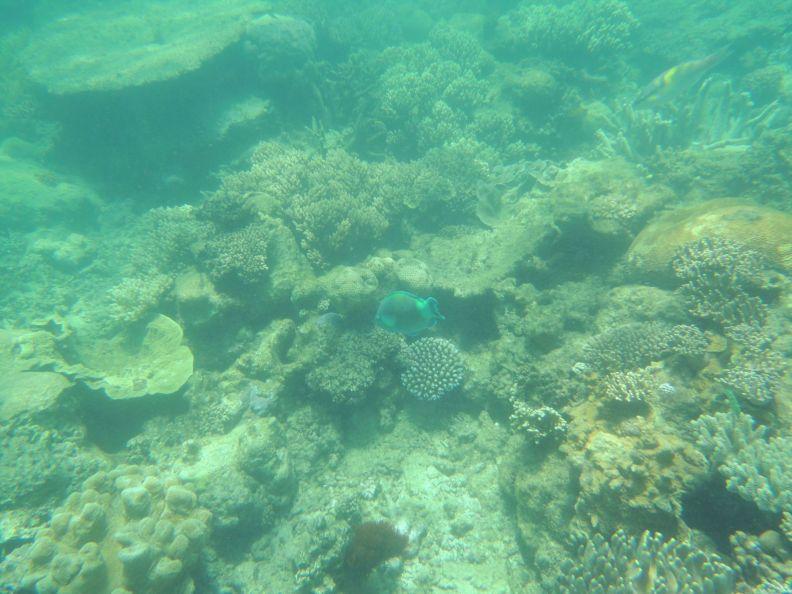 Koralová bariéra 3