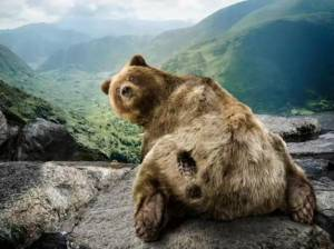 bear_with_sight