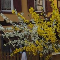 Frühlingsgefühle - ich liebe meinen Garten