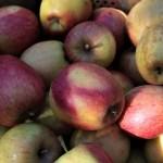 Apfellikör – die reiche Ernte 2018 wird verarbeitet