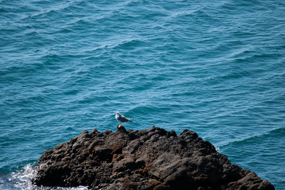 Fuerteventura - meine Briefmöwe