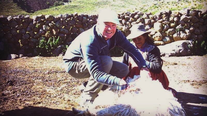shearing alpacas in Colca Valley