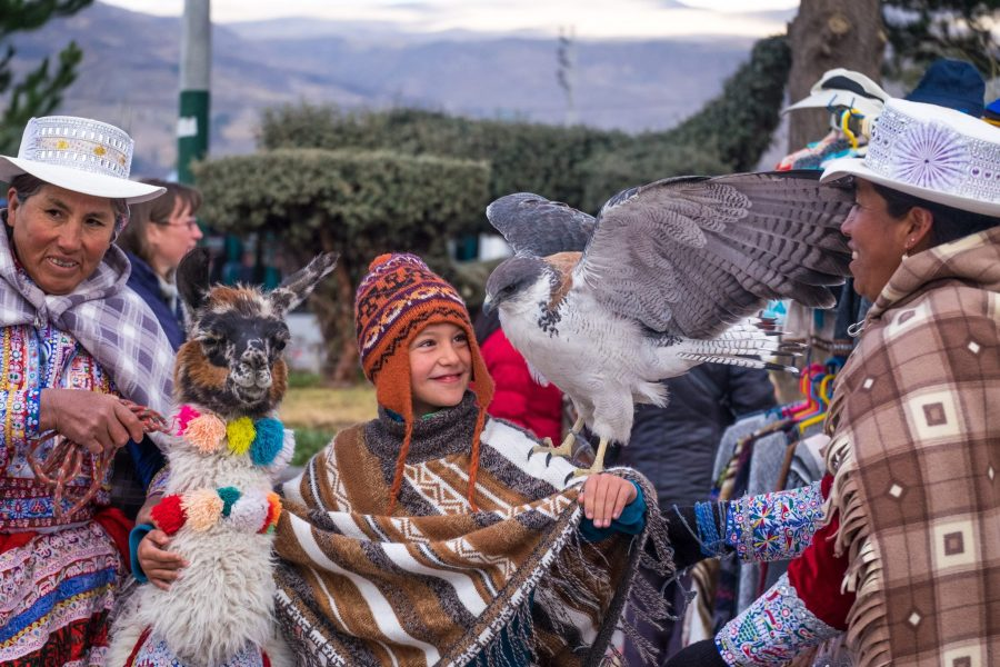 Homestay tours in Colca Canyon - Boy with llama and falcon.