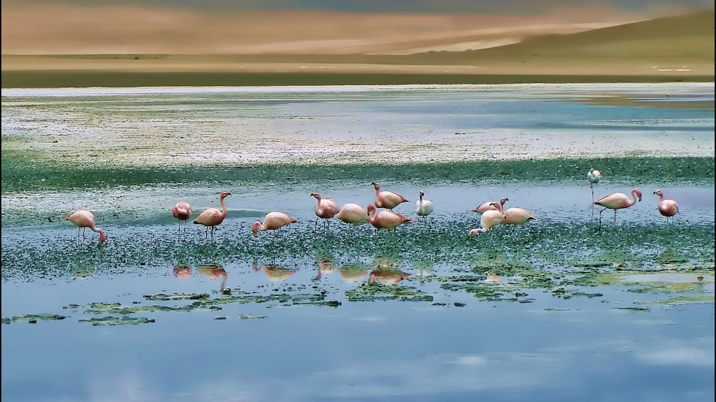 Flamingos during Salt flat during Uyuni Trip