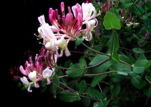 Les Fleurs de Bach - Pieds en Eventail - Antony
