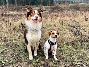 Beagle site de rencontre