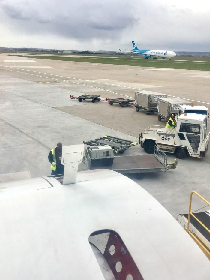 prendre l'avion avec son chien -tarmak avion - aéroport