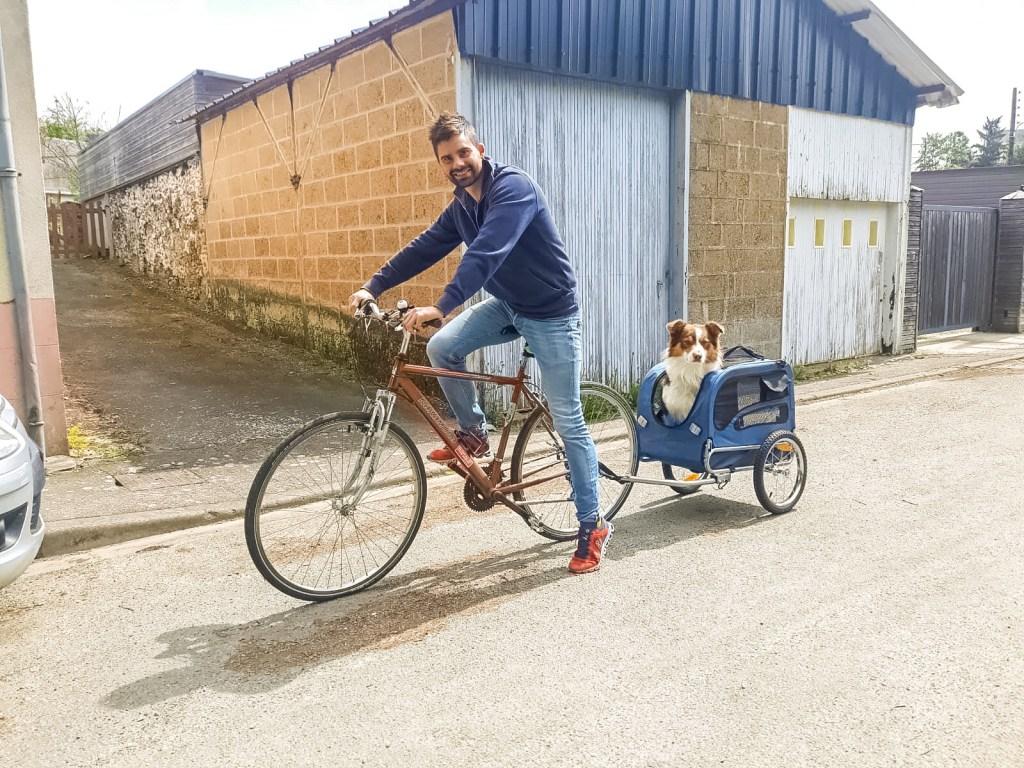 Chien vélo cariole