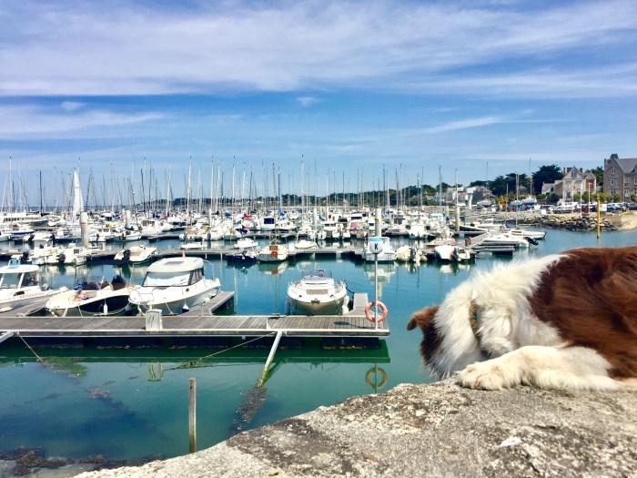 Piriac port Loire atlantique vélo randonnée chien