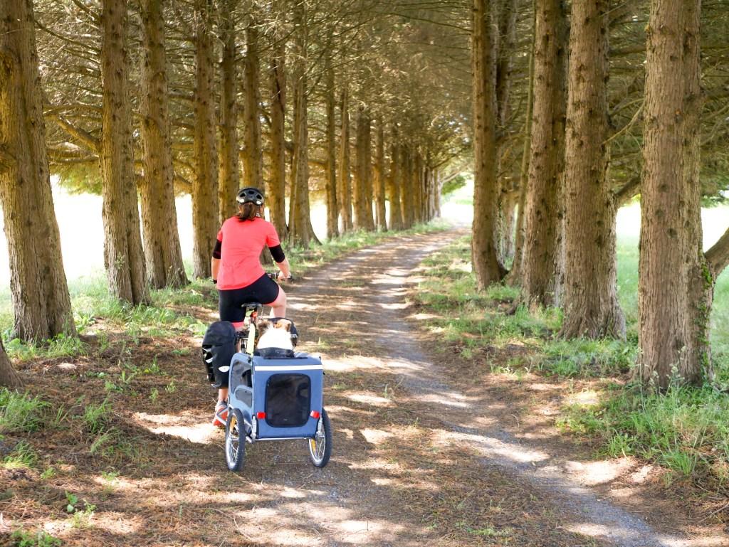 bois vélo cariole chien voyage