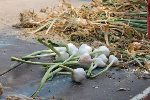Elio's Onions
