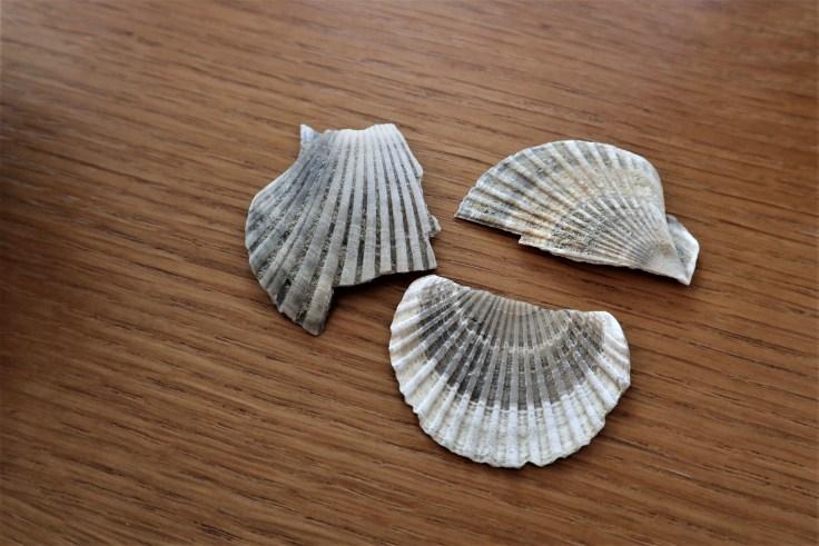 Valmaggiore Fossils