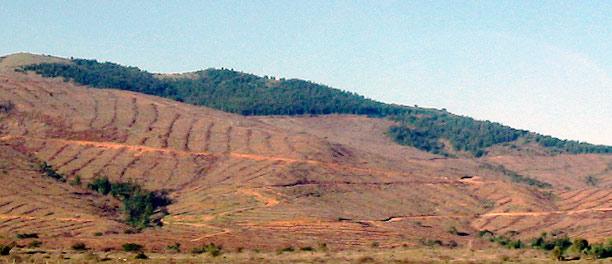 CAM: «Frente a la intervención y las negociaciones que actualmente está realizando la empresa forestal Mininco en territorio lavkenche»