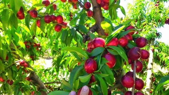 Frutas y verduras ecológicas