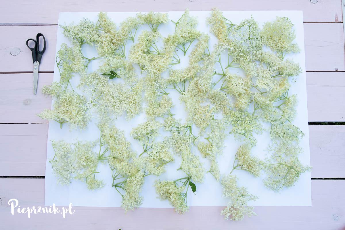 Nalewka z kwiatów bzu czarnego