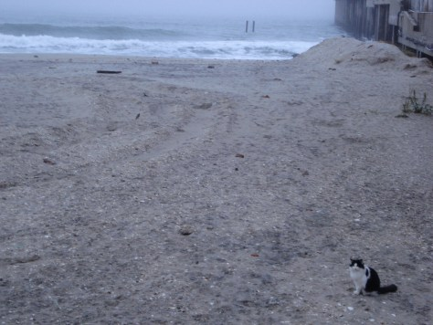 boardwalk cats project, atlantic city nj