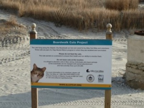 boardwalk cats project, atlantic city nj