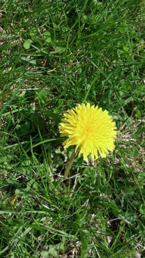 floral_051114_03