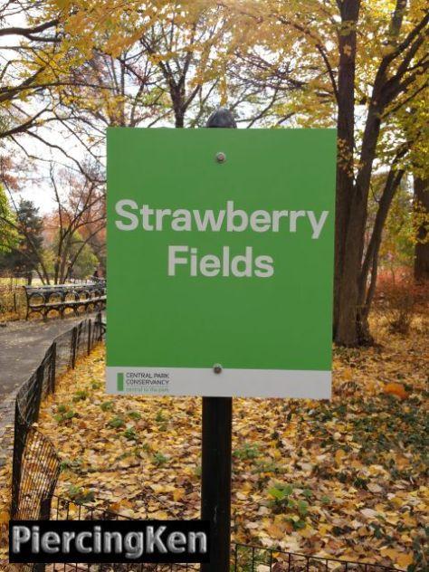 strawberryfields_120315_01