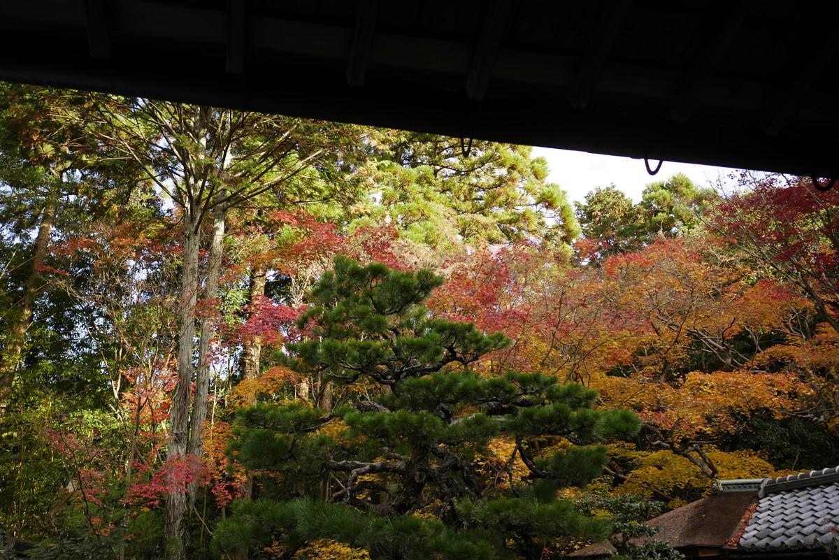 京都 高桐院