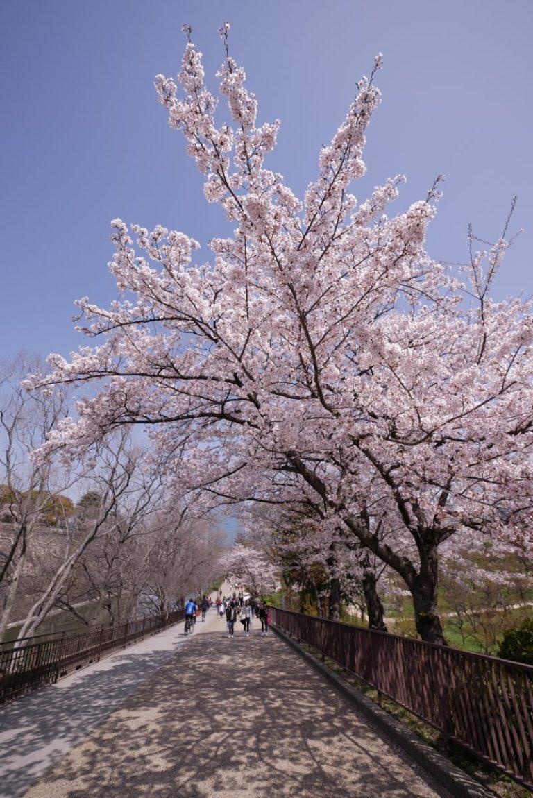 大阪 大阪城公園