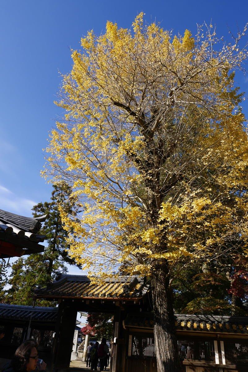 奈良 手向山八幡宮