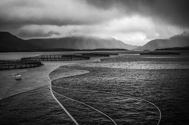 Dryna, Norway