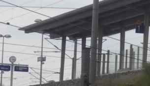 Haltepunkt Trachau ermittlungen