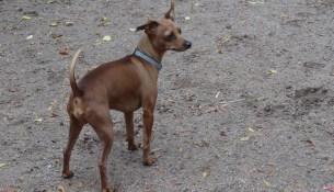 Hunde Leinenzwang Pietri 0902