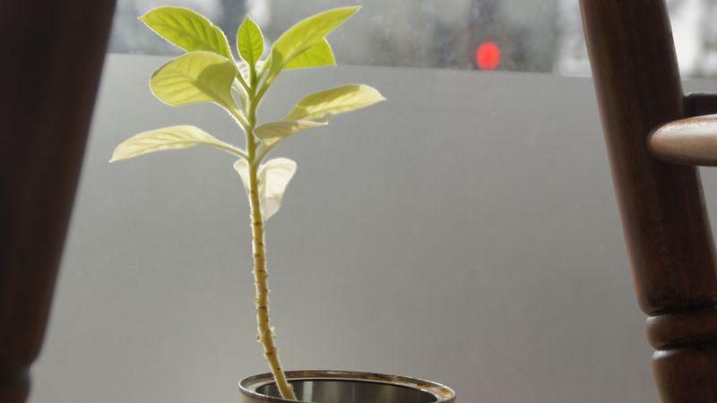 Zartes Pflänzchen Hoffnung: Mit den Topfpflanzen gedeiht auch die Mole