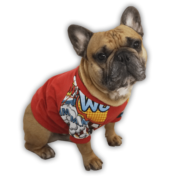 Bluza dla buldoga francuskiego Komiksowo czerwona