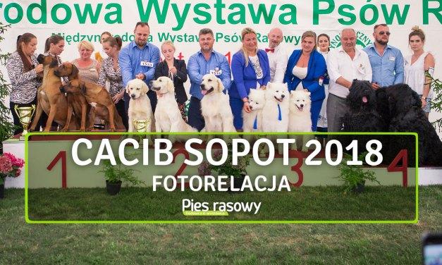 CACIB Sopot 2018