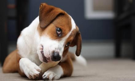 Jak zrozumieć naturalne psie potrzeby ipozwolić na ich bezpieczne realizowanie?