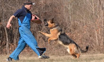 Kolejna szansa na emeryturę dla psów?