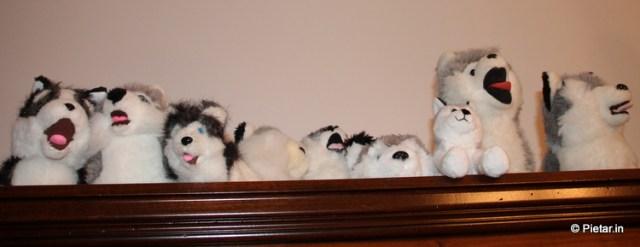 Koirat istuvat vitriinin päällä.