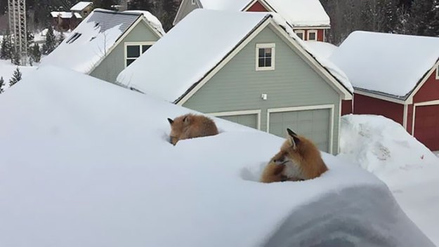 fox-family-access-rooftop-snow-andy-carver-3