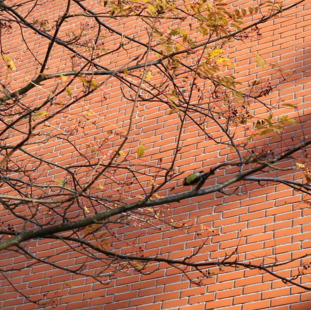 Talitiainen puussa.