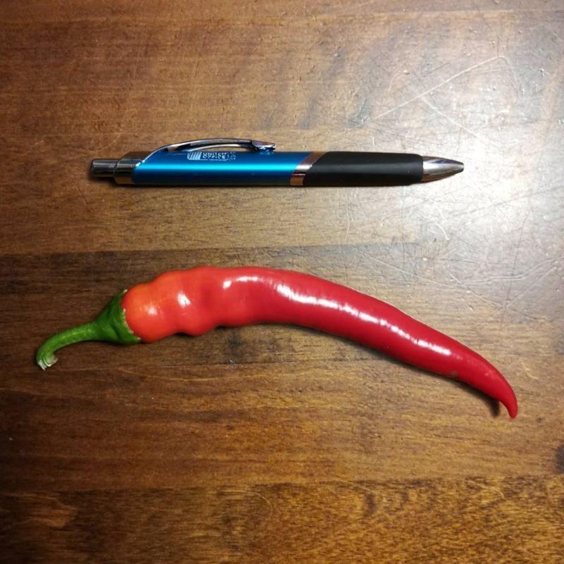 Ensimmäinen chili oli valtava.