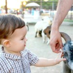 3 Kid-Friendly Fall Activities to Do in Phoenix