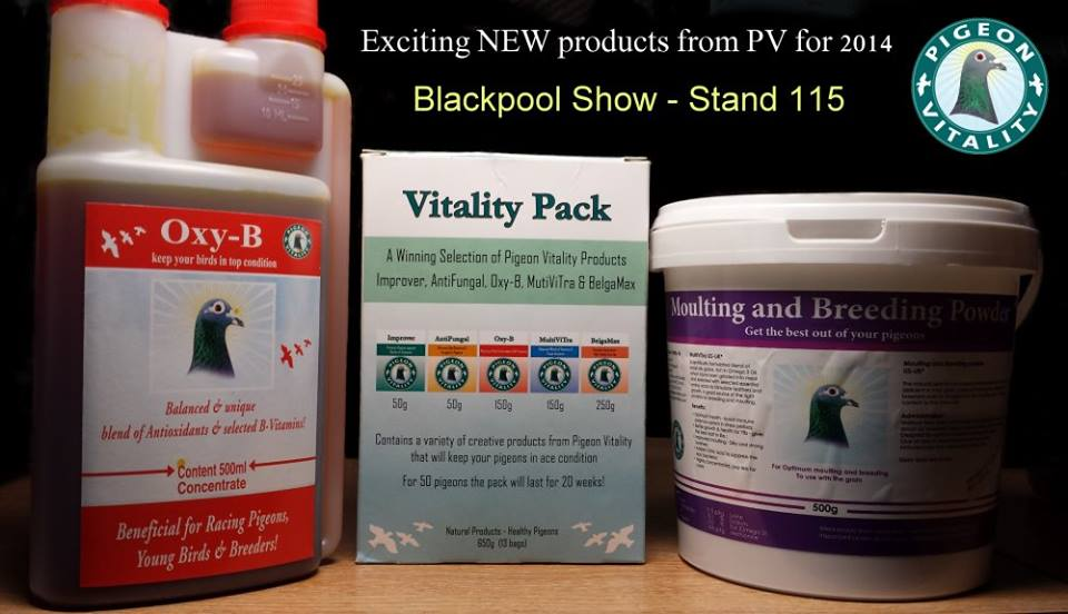 Blackpool Show
