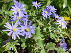 flower6(apr17)